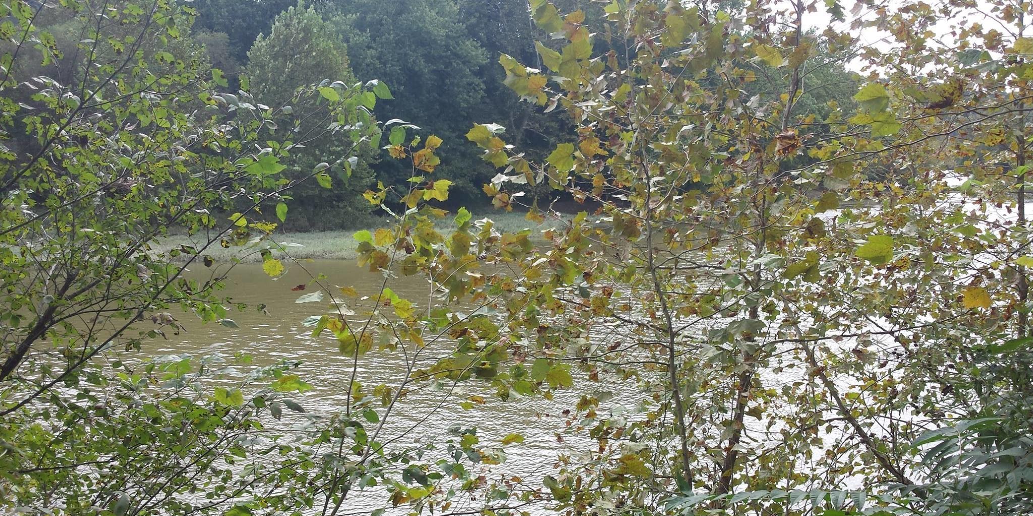 Friends of Lower Muskingum River